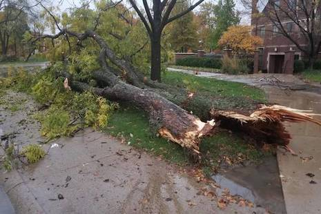 Storm Tree Damage in Lincoln NE
