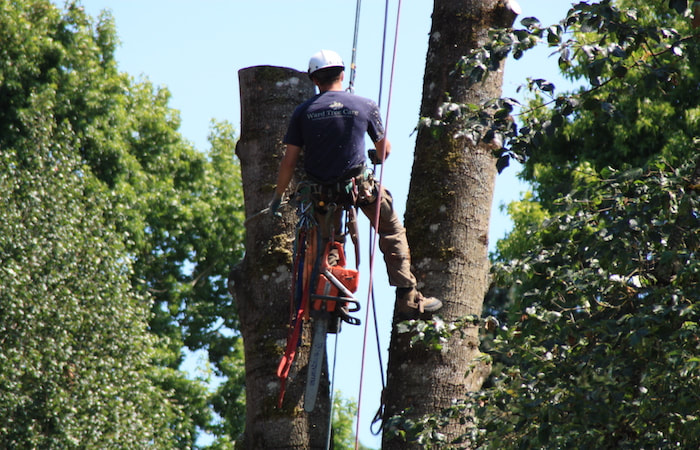 Removing a Tree in Lincoln