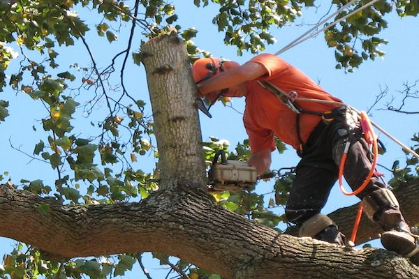 Tree Services in Lincoln NE